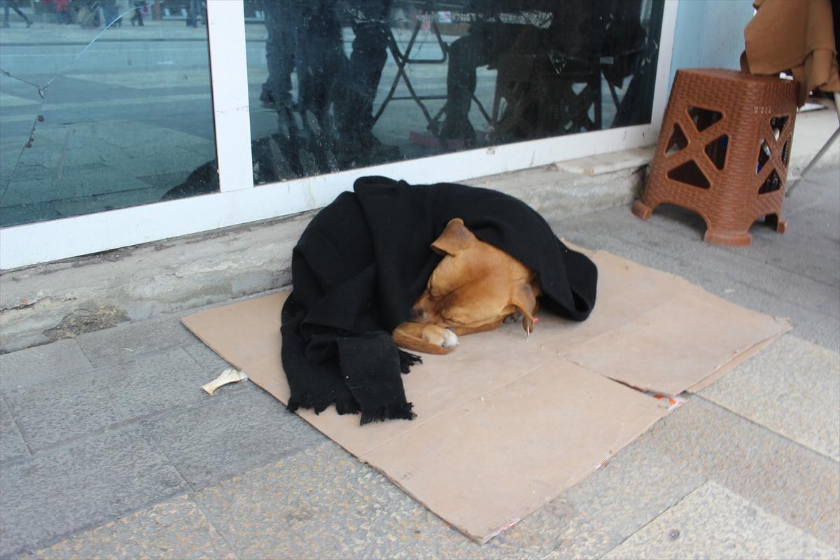 Sokak hayvanlarına soğukta battaniyeli önlem