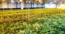 Bitki pasaportu sistemi değişiyor
